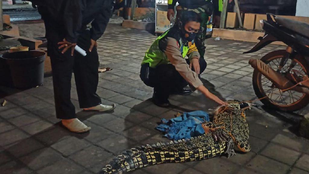 Buaya 1,6 Meter Ditangkap Nelayan dan Warga Sidoarjo