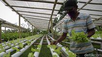 Geliat Pertanian Modern di Lereng Gunung Merapi