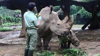 Cara Taman Safari Hadapi Krisis, Bukan Berhentikan Pegawai