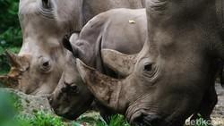 Atasi Krisis Pakan, Taman Safari Tanam Sayur dan Terima Sumbangan