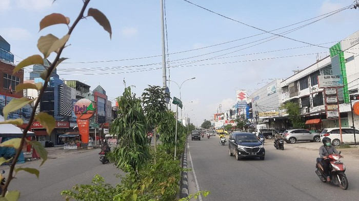 Lokasi 83 batang pohon ditebang pengusaha di Pekanbaru (Raja Adil-detikcom)