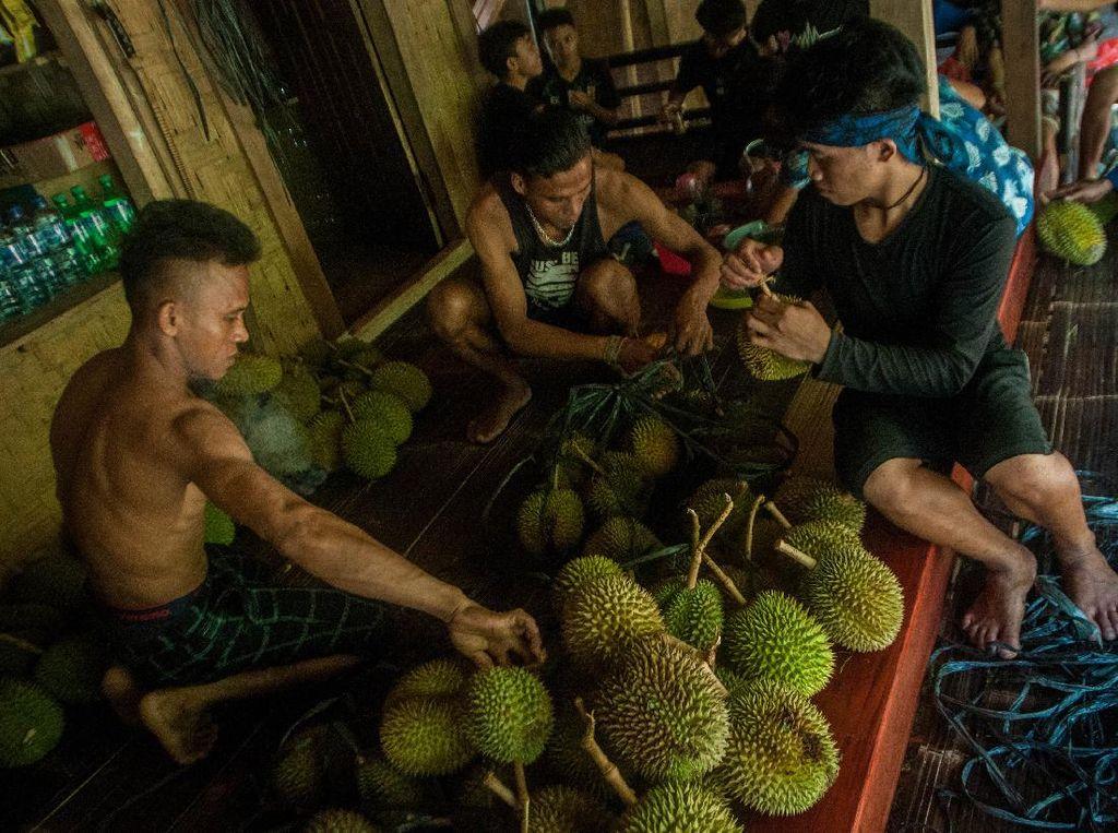 Kampung Adat Baduy Mulai Ramai Wisatawan yang Berburu Durian