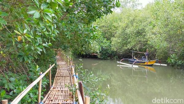 Traveler bisa menikmati hutan bakau buatan ini dengan perahu ataupun menapaki jalan yang terbuat dari bambu. Tak hanya itu, konservasi penyu di pantai ini juga semakin membuahkan hasil. (Ardian Fanani/detikTravel)