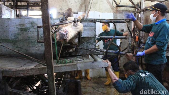 Rumah potong hewan Baleendah Bandung tetap bergeliat meski harga sapi tinggi