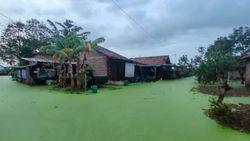 Banjir Berwarna Hijau di Pekalongan Ternyata Biasa Terjadi di Tambak-Sawah