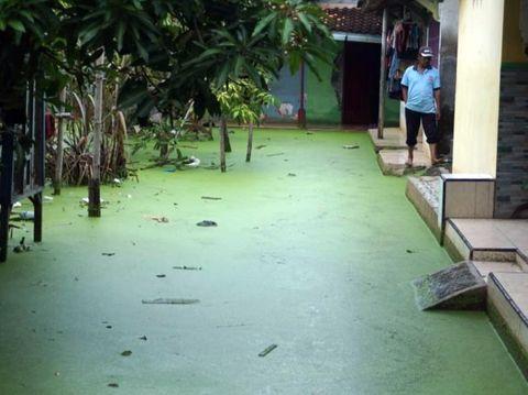 Air banjir berwarna hijau di  Dusun Clumprit, Desa Degayu, Kota Pekalongan, Selasa (19/1/2021)
