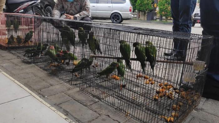 Jual Satwa Dilindungi Lewat Facebook, PNS di Pemprov Riau Ditangkap (Foto: Istimewa)
