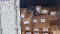 Kucing Super, 3 Minggu Bertahan dalam Kontainer Tanpa Makan dan Minum
