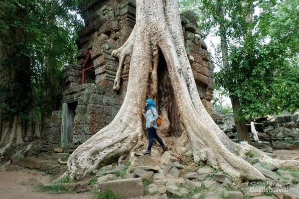 Ta Prohm Temple yaitu lokasi syuting film Tomb Raider yang terdaftar di situs UNESCO tahun 1992