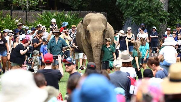 Momen perayaan gajah ini juga disaksikan oleh para pengunjung.