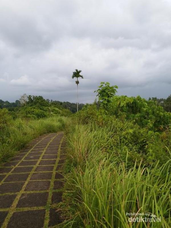 Trek Bukit Campuhan, Ubud, Bali