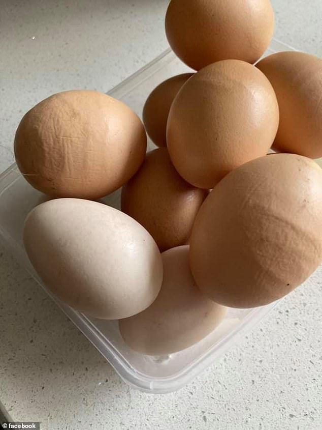Viral Telur Ayam dengan Kulit Bergelombang, Apa Aman Dimakan?