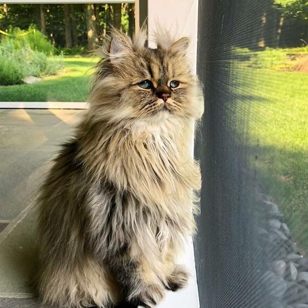 Wajahnya yang selalu seperti mengantuk membuat Bernaby menjadi seekor kucing yang unik dan tentu juga menggemaskan.