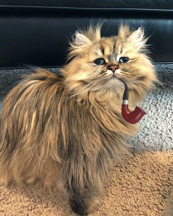 Nama kucing ini adalah Bernaby.