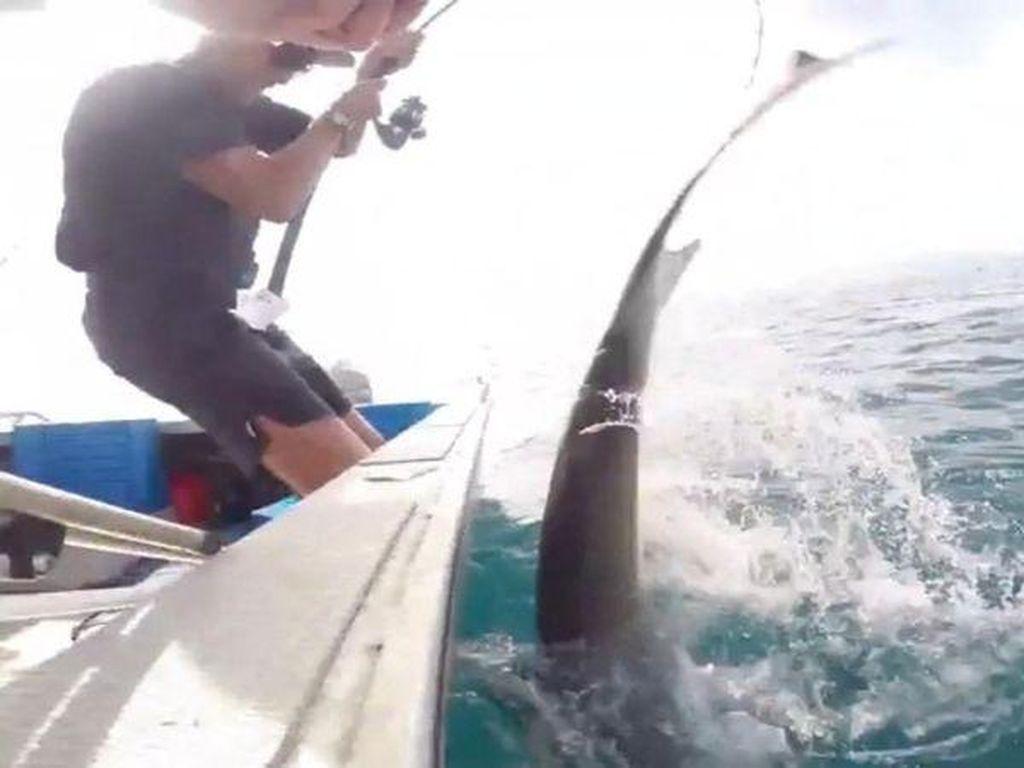 Pemancing Vs Hiu di Selandia Baru, Siapa Menang?