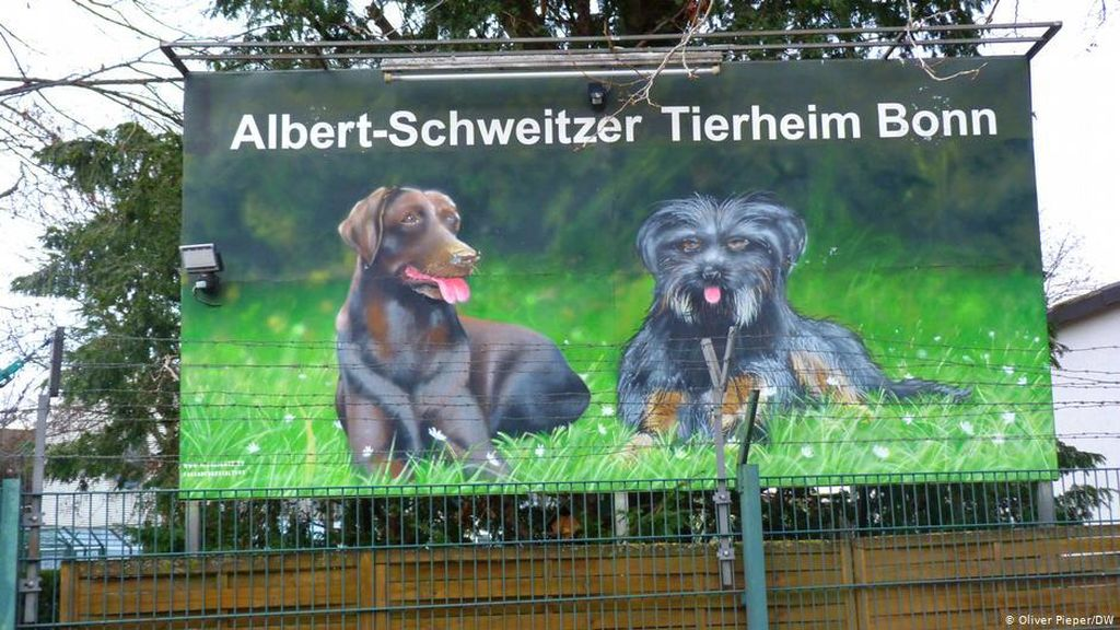 Permintaan Kucing dan Anjing di Jerman Meningkat Pesat di Masa Pandemi