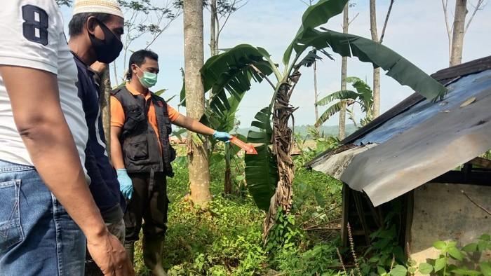 Polisi mengecek TKP penemuan mayat wanita berdaster di gubuk sawah  Desa Makam, Kecamatan Rembang, Kabupaten Purbalingga