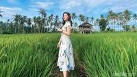 Sawah Mangaran Spot Instagramable Baru di Banyuwangi Serasa di Ubud Bali
