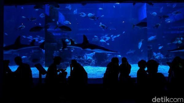 Jakarta Aquarium & Safari diketahui memiliki dua penghuni baru yakni Naga Laut (Sea Dragon) dan Gurita Raksasa (Giant Pacific Octopus).