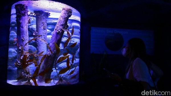 Seperti diketahui, Jakarta Aquarium & Satwa jadi salah satu tempat wisata yang kerap didatangi pengunjung.