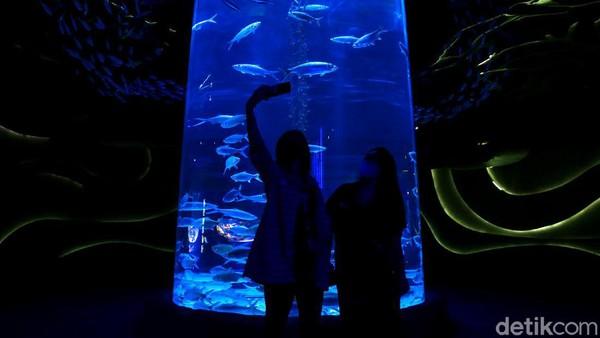 Di sana pengunjung tak hanya dapat melihat beragam hewan laut yang unik nan menarik tetapi juga menjadi salah satu sarana edukasi untuk anak-anak maupun pengunjung lainnya.
