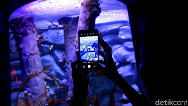 Pengunjung memotret salah satu koleksi baru Jakarta Aquarium & Safari, Jakarta, Rabu (27/1/2021).