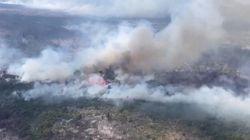 Kebakaran Hutan di Argentina Kini Mencapai 11.000 Hektare