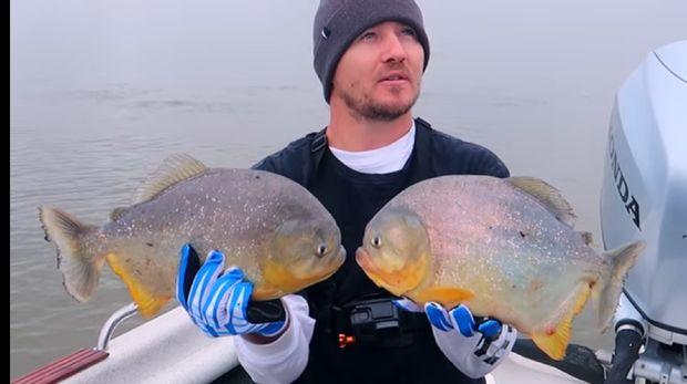 Masak Ikan Piranha Hasil Tangkapannya, Pria Ini Bilang Rasanya Tak Enak