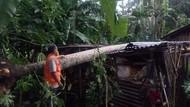 Angin Kencang di Cilacap, Pemotor Tertimpa Pohon-Atap Dermaga Ambruk