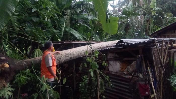 Seorang pemotor tertimpa pohon tumbang dan atap dermaga Wiajayapura ambruk akibat angin kencang yang melanda wilayah Kabupaten Cilacap, Rabu (27/1/2021) sore.