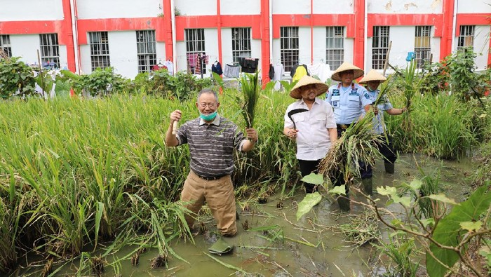 Eks Walkot Bandung Dada Rosada dan eks Ketua DPR RI Setya Novano panen padi di Lapas Sukamiskin.