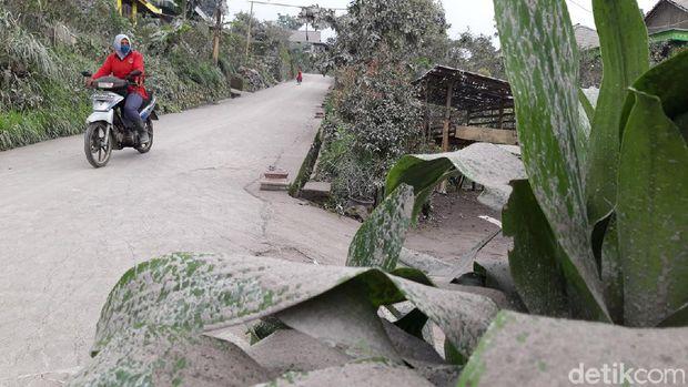 Hujan abu dampak erupsi Gunung Merapi di Dukuh Gondang, Desa Cluntang, Kecamatan Musuk, Boyolali, Kamis (28/1/2021).