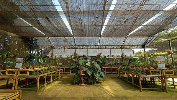 Traveler pecinta anggrek bisa mengunjungi Kebun Anggrek Kediri. Di sini, kamu bisa menyegarkan diri dengan melihat anggrek-anggrek yang cantik. (Kampoeng Anggrek Kediri/instagram)