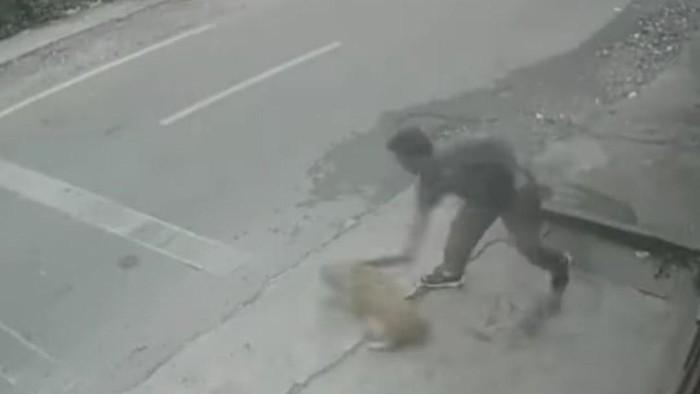 Screenshot video viral pria pukuli anjing di Medan (dok. Istimewa)