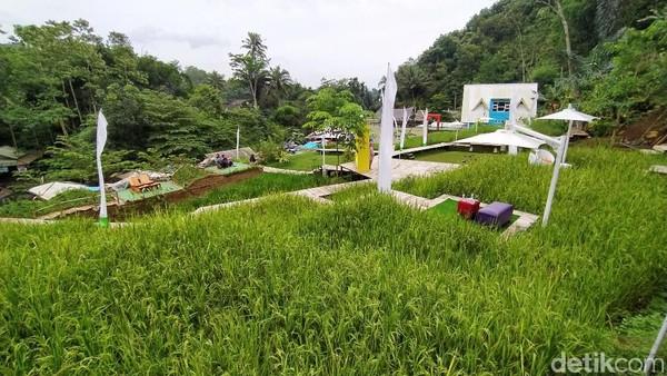 Cireong Natural View Farming memang baru buka awal Januari 2021 ini. Destinasi ini merupakan area persawahan yang disulap menjadi spot wisata yang menarik. (Dadang Hermansyah/detikTravel)