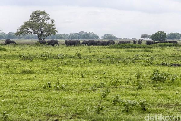 Taman Nasional Baluran berada di Banyuputih, Situbondo, Jawa Timur. (Muhammad Ridho)