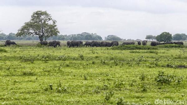 26 jenis mamalia pun hidup di taman ini.