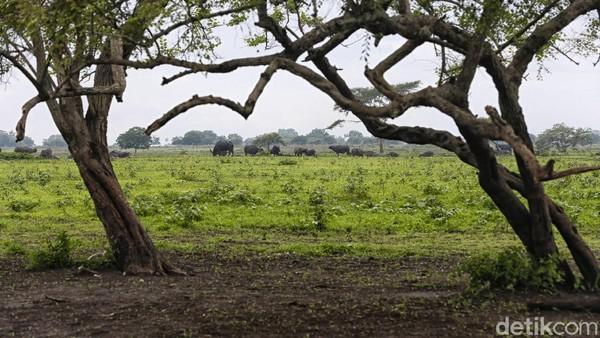 Sejumlah satwa liar terlihat hidup rukun di dalam taman ini seluas 25.000 Ha.