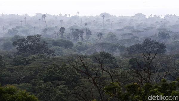 Taman nasional ini terdiri dari sejumlah tipe vegetasi seperti, sabana, hutan mangrove, hutan musim, hutan pantai, hutan pegunungan bawah, hutan rawa dan lain-lain.