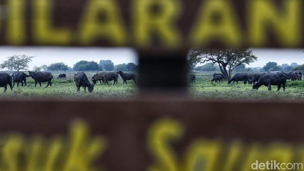 Suaka margasatwa ini resmi diumumkan sebagai taman nasional pada 6 Maret 1980.