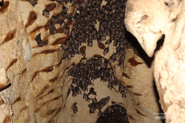 Kelelawar dalam goa Istana Ular