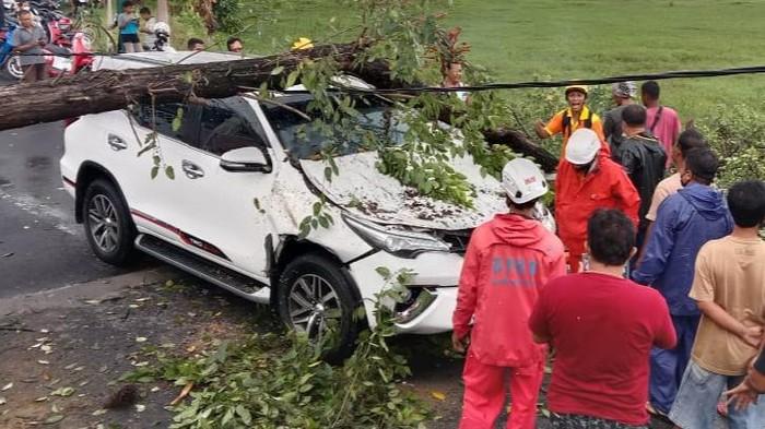 Mobil berisi delapan orang tertimpa pohon tumbang di Desa Jimbung Kecamatan Kalikotes.