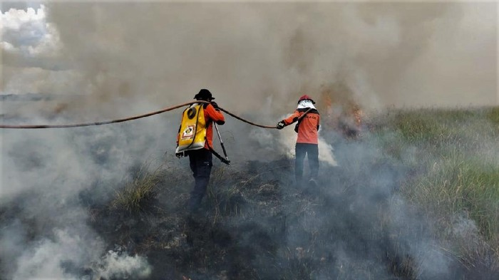 Personel Manggala Agni Daerah Operasi Sulawesi Tenggara berusaha memadamkan api yang membakar lahan di Taman Nasional Rawa Aopa Watumohai, Kabupaten Bombana, Sulawesi Tenggara, Senin  (1/2/2021). Luas Karhutla di kawasan savana Taman Nasional Rawa Aopa Watumohai terus bertambah, sementara personel Manggala Agni kesulitan melakukan pemadaman api akibat angin kencang, terbatasnya jumlah personel serta sumber air yang jauh dari titik api. ANTARA FOTO/Humas Manggala Aqni Sulawesi Tenggara/jjn/Handout/wsj.