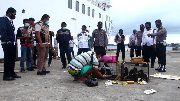 Polisi amankan puluhan satwa dilindungi dari kapal yang baru bersandar di Pelabuhan Nusantara Parepare