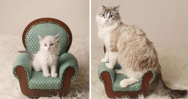 Pasti pemiliknya bahagia semenjak kucing ini kecil. Makin lucu ! (dok Bored Panda)