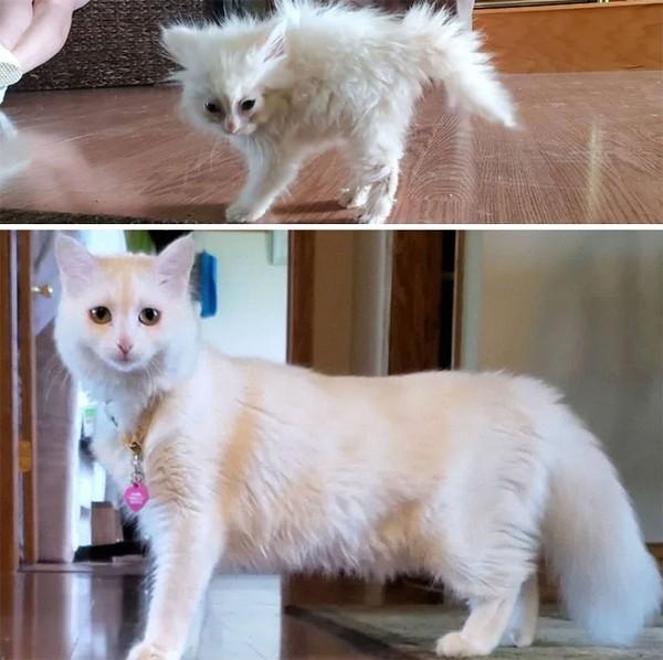 Lihatlah perubahan kucing yang awalya bulunya berantakan menjadi cantik seperti ini. (dok Bored Panda)