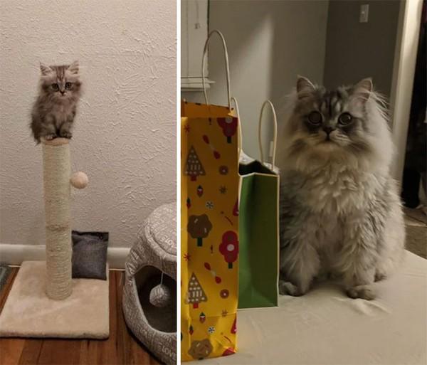 Percayalah, dari kecil kucing ini menggemaskan! Saat tumbuh besar makin terliat lucu. (dok Bored Panda)