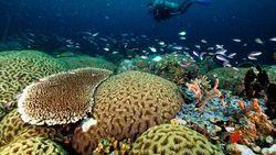 Diving di Halmahera Barat