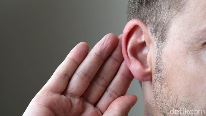 llustrasi telinga