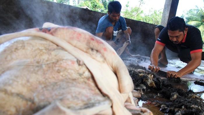 Pekerja membersihkan bulu pada kulit kerbau saat proses pembuatan kerupuk kulit di Desa Ujong Tanjong, Kecamatan Meureubo, Aceh Barat, Aceh, Rabu (3/2/2021). Pelaku usaha menyatakan, sejak enam bulan terakhir produksi kerupuk kulit menurun hingga 65 persen dari biasanya akibat terkendala pasokan bahan baku kulit dari distributor. ANTARA FOTO/Syifa Yulinnas/hp.